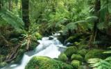 Cement Creek, Yarra Ranges National Park. Victoria