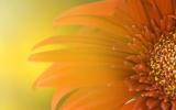Windows 7 - Power Flower