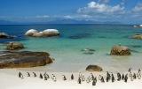 Penguins on Boulder Beach, South Africa